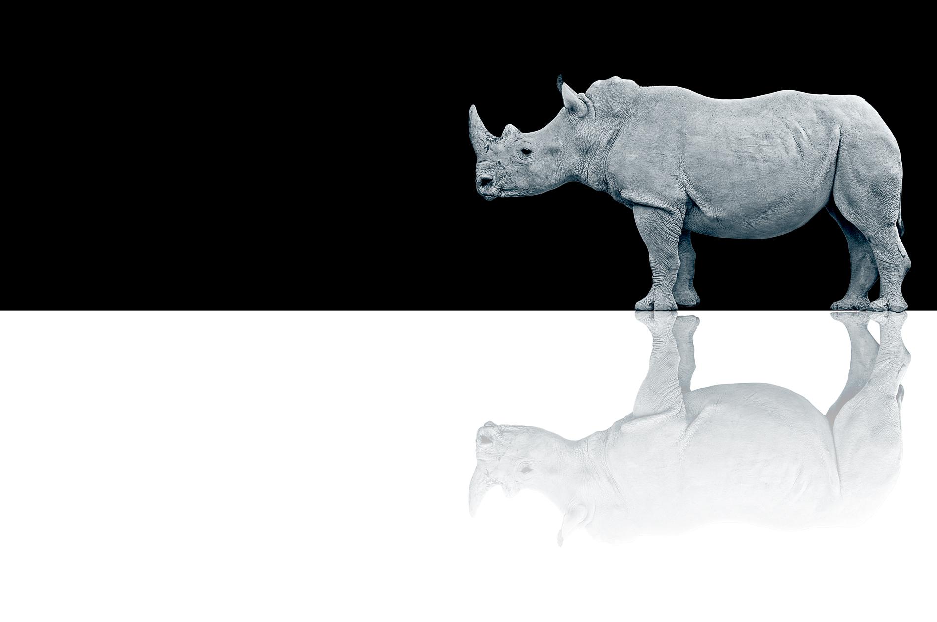 rhino, nashorn